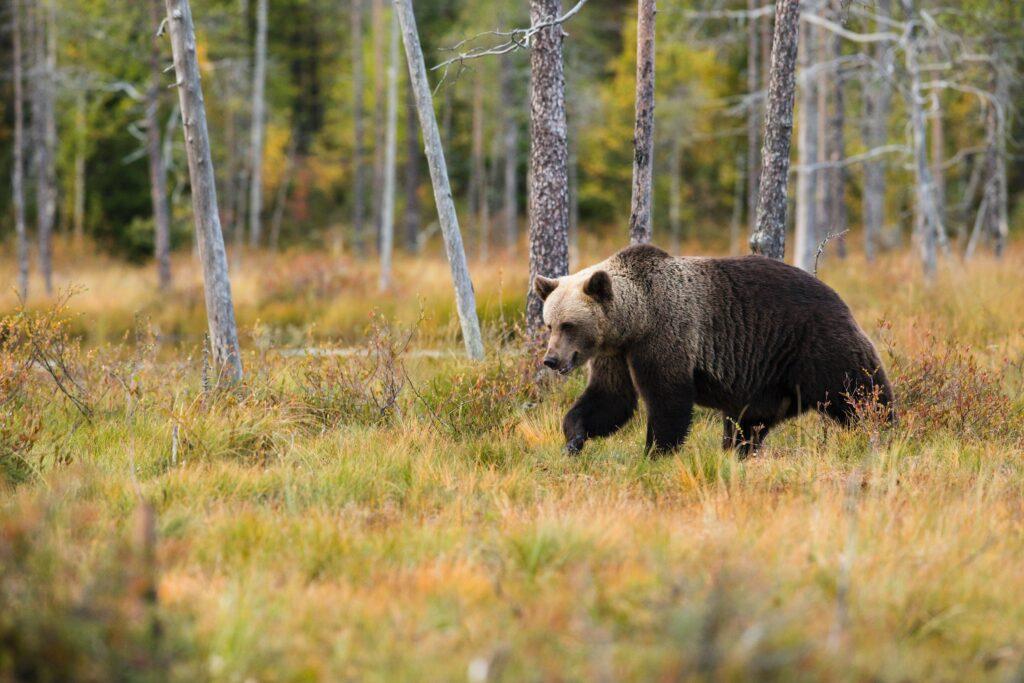 山でクマに遭遇したイメージ