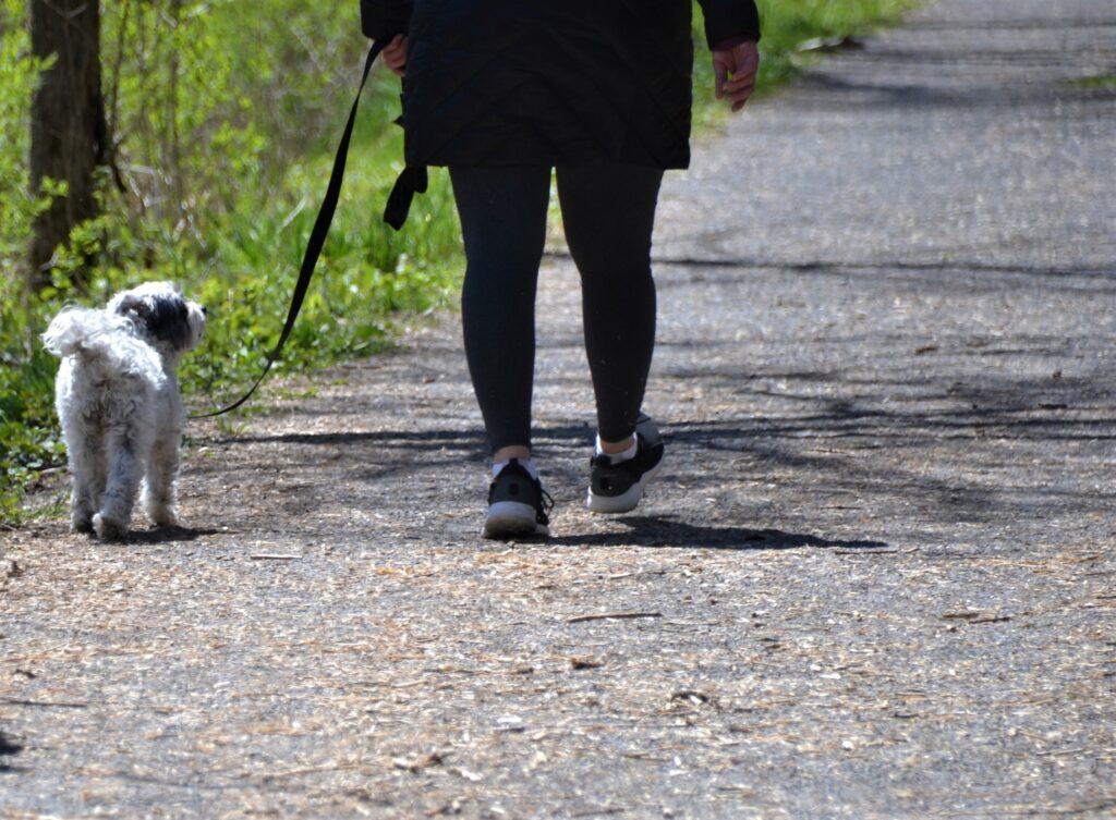 犬を散歩しウォーキングしているイメージ