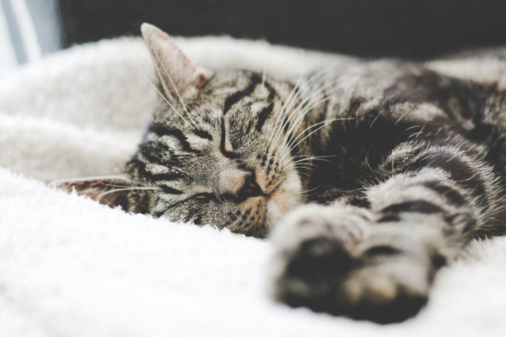 20分の仮眠をとる猫のイメージ
